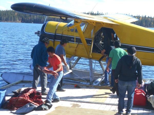 Fall moose hunting harvest, Kingfisher Lake 2016